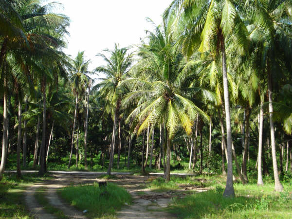 Koh Samui, Beach land for sale, access road