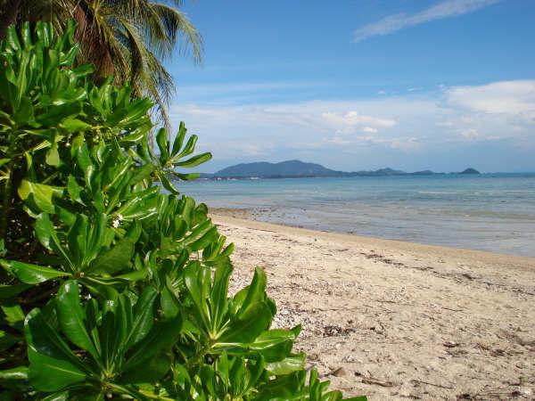 Kkoh Samui, beach land for sale, the beach