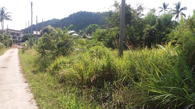 Koh Samui Land For Sale, small land plot for sale, flat land for sale,