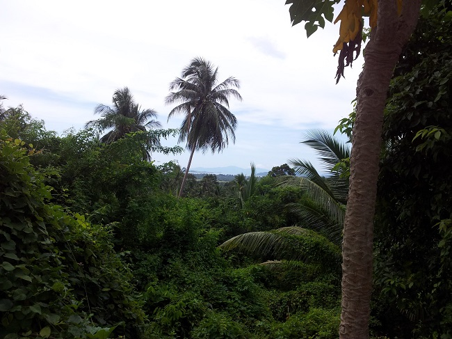 Koh Samui Land for sale, Hillside land for sale, distant sea view,