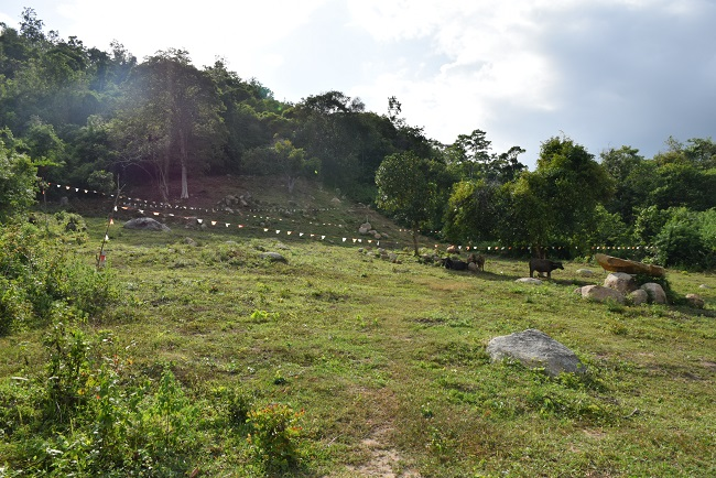 Ko Samui Properties land for sale, hillside sea view land for sale,