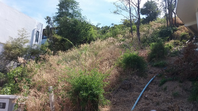 Ko Samui Properties sea view land for sale, hillside sea view land for sale,
