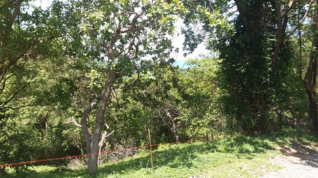 Ko Samui Properties sea view land for sale, hillside land for sale,
