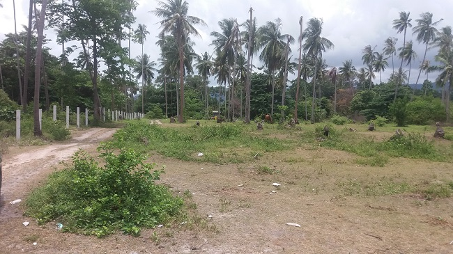 Ko Samui Properties beach land for sale, beach land for sale in Koh Samui,