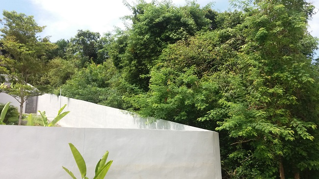 Ko Samui Properties sea view land for sale, Thailand land for sale,