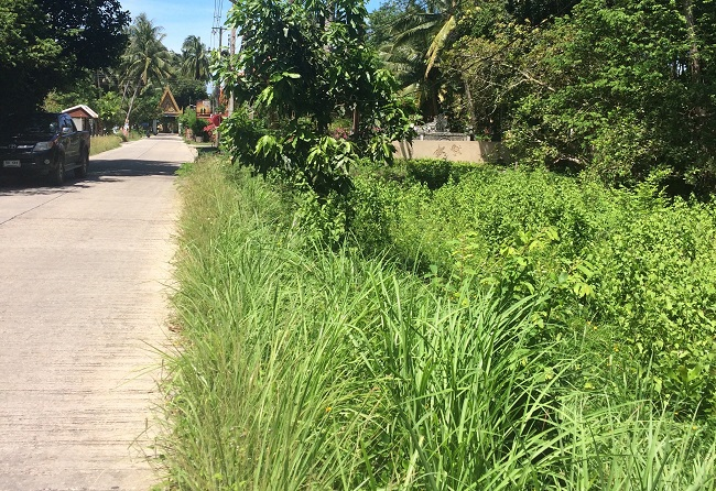 Ko Samui Properties flat land for sale in Lipa Noi, land for sale in Thailand,