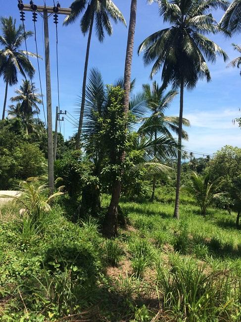 Ko Samui Properties land for sale, small plot land for sale in Koh Samui, Land for Sale in Thailand,
