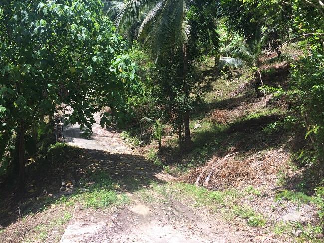 Ko Samui Properties hillside land for sale, Ko Samui Properties sea view land for sale,
