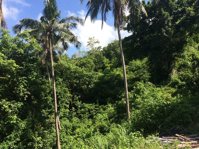 Ko Samui Properties sea view land for sale in Lamai, property for sale in Thailand,
