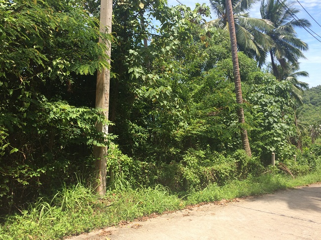 Ko Samui Properties sea view land for sale, Ko Samui Properties hillside land for sale, Thailand land for sale,