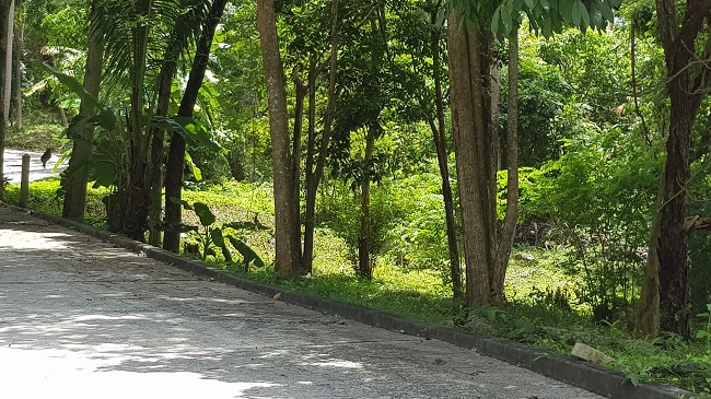 Ko Samui Properties sea view land for sale in Ban Tai, Thailand land for sale,