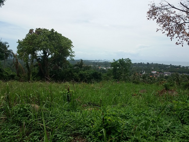 Ko Samui Properties sea view land for sale, hillside land for sale in Ko Samui,