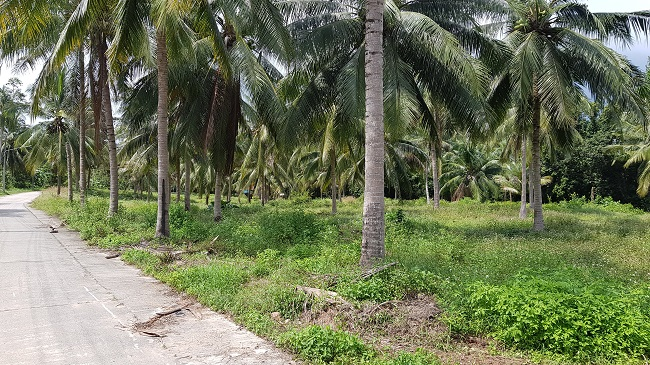 Ko Samui Properties land for sale, one rai land plots for sale in Taling Ngam,