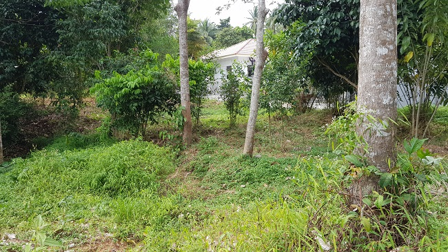 Ko Samui Properties flat land for sale, Maenam land for sale, one rai land for sale. Koh Samui estate agent,